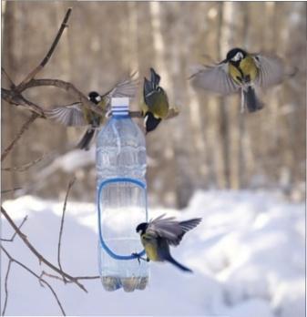 Чим годувати птахів взимку