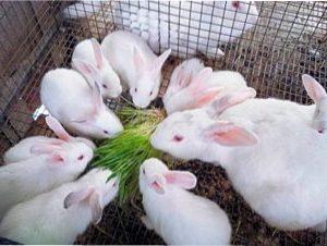 Годування кроликів взимку