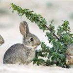 Утримання кроликів взимку в домашніх умовах
