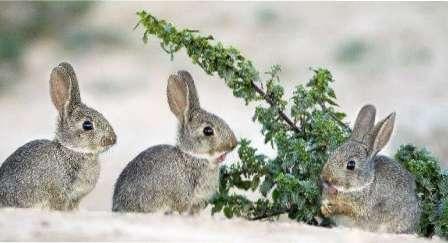 Утримання кроликів взимку