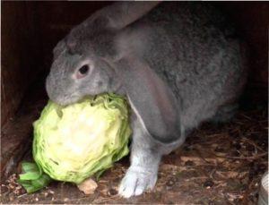 У зимовий час тварини особливо потребують поживних речовинах