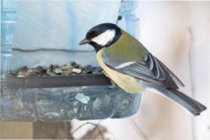 Як та чим годувати птахів взимку у годівниці