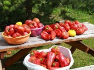 Що необхідно і томатам?