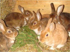 Грубий корм для кроликів взимку