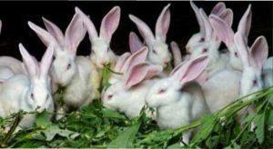 Кролики дуже люблять сіно, солому і деревні гілки