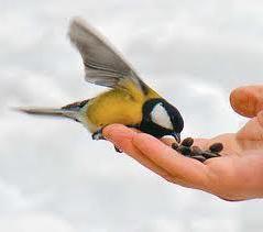 Лісовим пташкам теж потрібна допомога людини