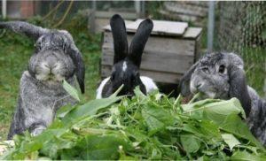 Взимку тваринам бажано видавати свіжу моркву, капусту і кормові буряки
