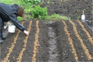 Важливо, щоб місце, де посаджене насіння, добре освітлювалося