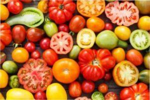 Середньопізні помідори