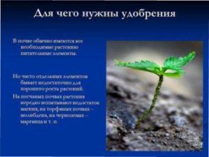 Перш, ніж засаджувати грядки, потрібно удобрити землю