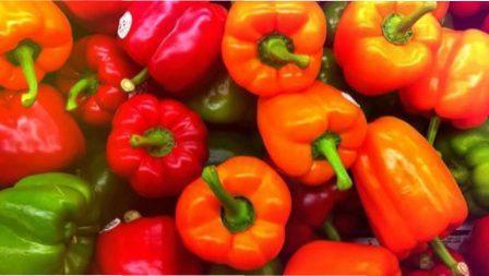 Болгарський перець – кращі сорти