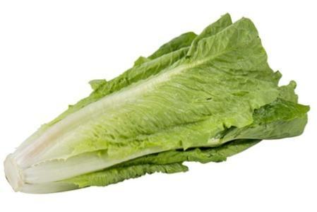Вирощування салату ромен в Україні