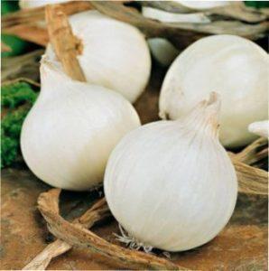 Вирощування цибулі з насіння