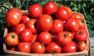Характеристика сорту помідорів «Турмалін»