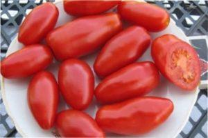 Сорт томатів «Червоне ікло»
