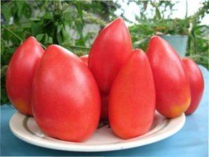 Найврожайніший сорт помідорів «Супер-модель»