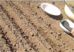 Припудрення насіння крейдою