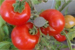 Вирощування сорту помідорів «Аляска» в Укрїні