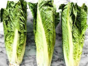 Вирощування салату ромен на городі