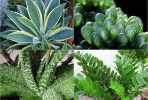 Кімнатні рослини - каталог з описом