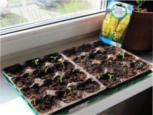 Передпосадкова обробка насіння - чи потрібна вона і в чому полягає
