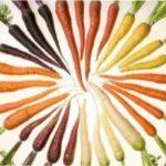 Кращі сорти моркви для вирощування в Україні в 2021 році з фото та відгуками