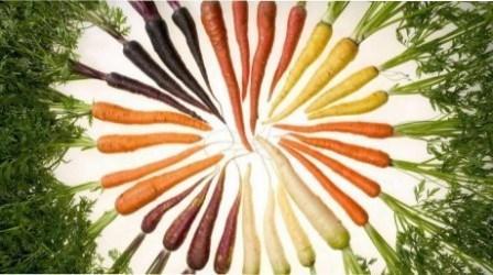 Кращі сорти моркви. Фото та відгуки