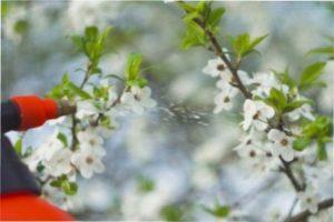 Укриття від весняних заморозків