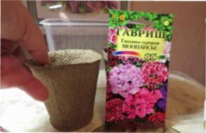 як посадити гвоздики