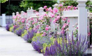 однорічні квіти для альтанки