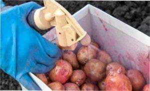 Протруйник Табу від колорадського жука на картоплі
