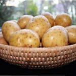 Сорт картоплі Гірник - все про вирощування розсади з насіння