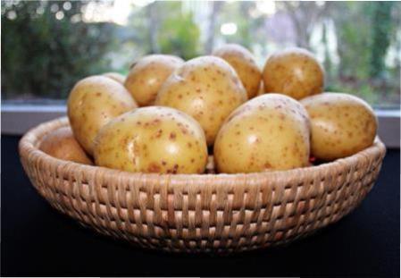 Сорт картоплі Гірник — все про вирощування розсади з насіння