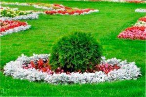 Багаторічні квіти для бордюрів