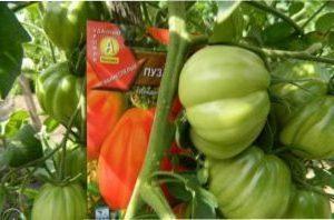 Особливості вирощування помідорів сорту Пузата Хата
