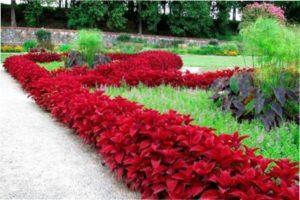 Низькорослі багаторічні рослини для бордюру