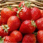 Чим обробити полуницю від шкідників та хвороб