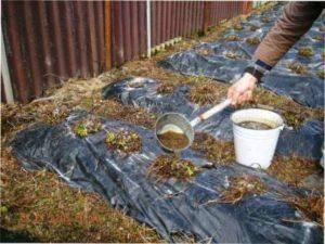 Хімічні засоби - обробка полуниці