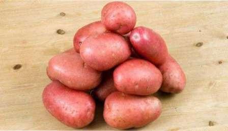 Сорт картоплі Журавинка: Характеристика та опис сорту, хвороби і шкідники