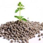 9 видів фосфорних добрив — їх застосування в садівництві