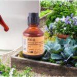 Підживлення квітів йодом: для кімнатних рослин, овочів і ягід