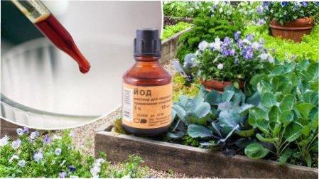 Підживлення квітів йодом - як підживлювати квіти, овочі та ягоди йодом в саду та на городі