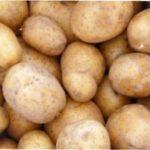 Як виростити хороший урожай картоплі на вашій дачі