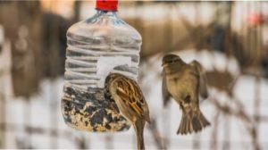 15 ідей, як можна використовувати пластикові пляшки на дачі - опис з фото