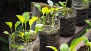 Ідея 1. Пластикові пляшки для вирощування розсади