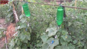 Ідея 2. Крапельний полив з пластикових пляшок
