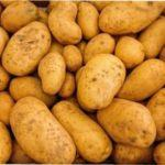 Як виростити картоплю з насіння — переваги і недоліки способу