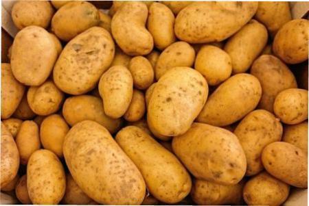 Вирощування картоплі з насіння в домашніх умовах