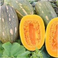 Урожайність і застосування плодів мускатного гарбуза