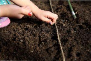 Правила посіву насіння помідорів Чері